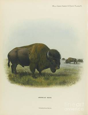 Yak Painting - American Bison by MotionAge Designs