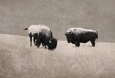 American Bison Art Print by Ron Jones