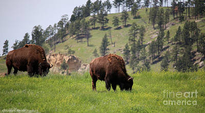 Photograph - American Bison by Susan Herber