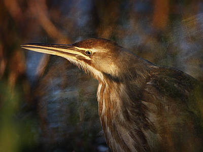 Photograph - American Bittern by Charles McKelroy