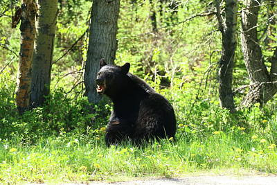 Photograph - American Black Bear by Christiane Schulze Art And Photography