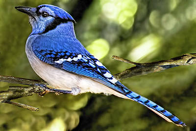 Photograph - Blue Jay Bokeh by Kay Brewer