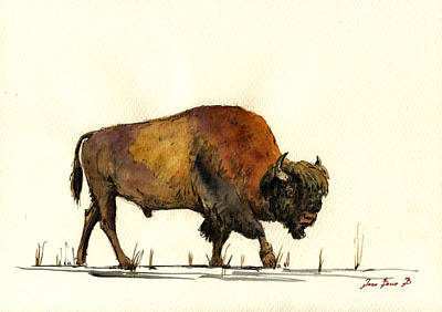 Bison Wall Art - Painting - American Buffalo Watercolor by Juan  Bosco