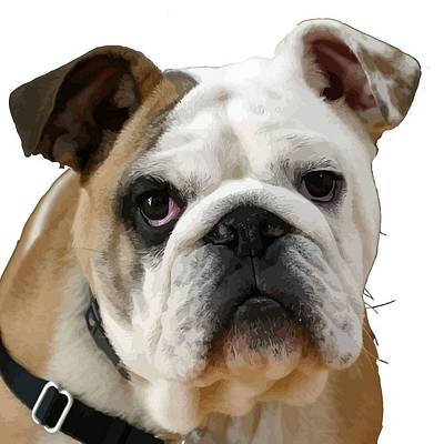 American Bulldog Background Removed Art Print by Tracey Harrington-Simpson