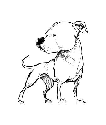 Drawing - American Bulldog Gesture Sketch by John LaFree