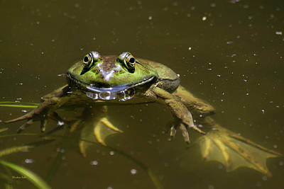 Photograph - American Bullfrog by Christina Rollo
