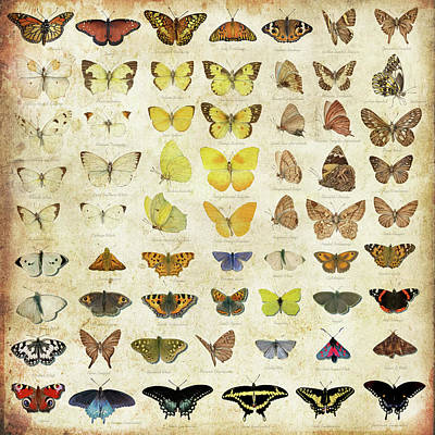 Mixed Media - American Butterflies by Gina Dsgn