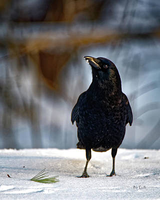 Art Print featuring the photograph American Crow In The Snow by Bob Orsillo