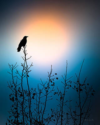 Crow Photograph - American Crow Sunrise by Bob Orsillo