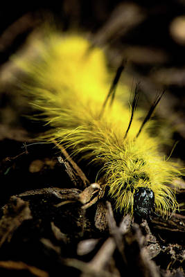 Art Print featuring the photograph American Dagger Moth Caterpillar by Onyonet  Photo Studios