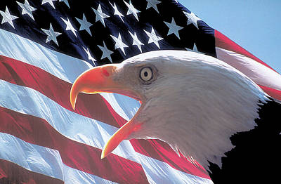 Photograph - American Eagle And Flag by Carl Purcell