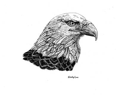 Drawing - American Eagle by Cynthia  Lanka