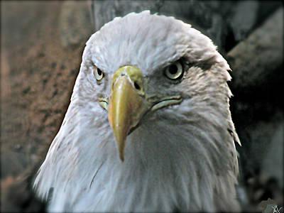 American Eagle  Art Print by Debra     Vatalaro