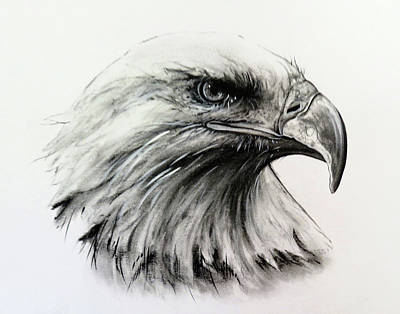 Eagle Head Drawings Page 2 Of