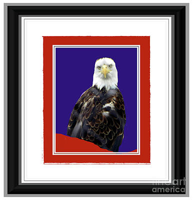 Photograph - American Eagle Stare by Shirley Moravec