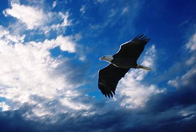 Digital Art - American Eagle by Steve Karol