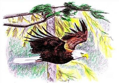 Drawing - American Eagle by Toon De Zwart