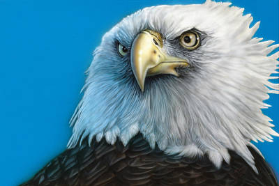 Dakota Painting - American Eagle by Wayne Pruse