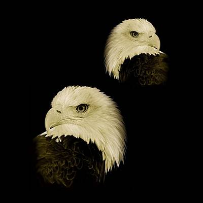 Photograph - American Eagles by Louise Fahy