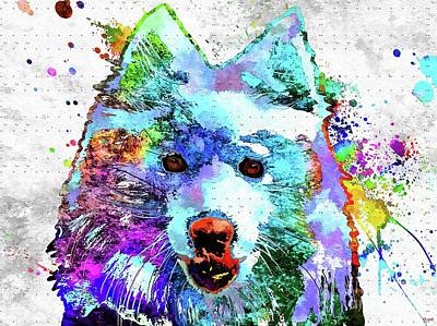 Watercolor Pet Portraits Mixed Media - American Eskimo Dog Colored by Daniel Janda