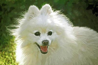 Photograph - American Eskimo Or Eskie Dog by Sandi OReilly