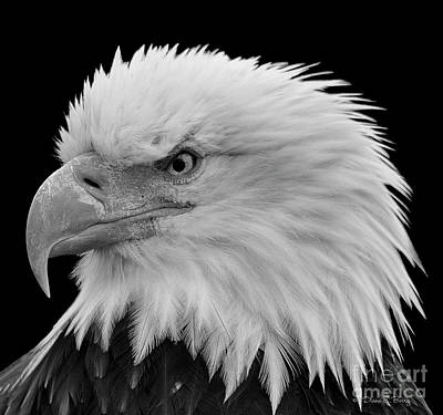 Photograph - American Fierce by Diane E Berry