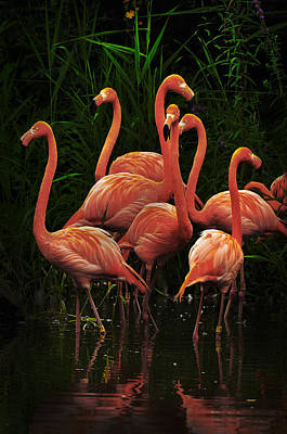 Print featuring the photograph American Flamingo by Michael Cummings