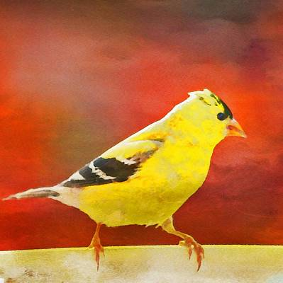 Painting - American Goldfinch by Bonnie Bruno