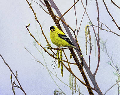 Painting - American Goldfinch by Carol Hanna