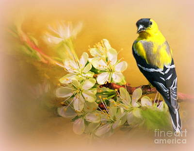 Photograph - American Goldfinch In The Flowers by Myrna Bradshaw