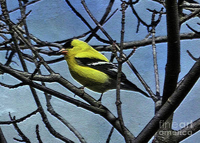 Photograph - American Goldfinch by Lydia Holly