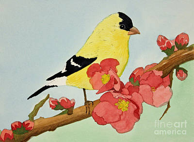American Goldfinch Art Print by Norma Appleton
