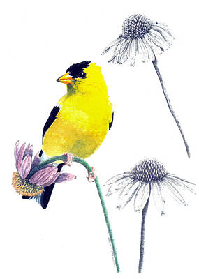Drawing - American Goldfinch On Coneflowers by Marcus England
