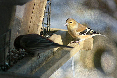 Photograph - American Goldfinch by Susan  McMenamin