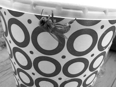 Photograph - American Honey Bee In Black And White  by Chris Mercer