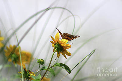 Photograph - American Lady Butterfly Balancing By The Sea  by Karen Adams