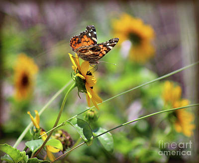 Photograph - American Lady Butterfly By The Beach by Karen Adams