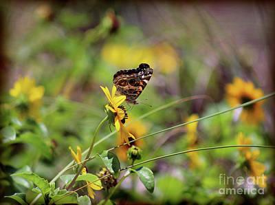 Photograph - American Lady Butterfly Seaside by Karen Adams