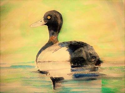 Lesser Scaup Painting - American Lesser Scaup by Khalid Saeed