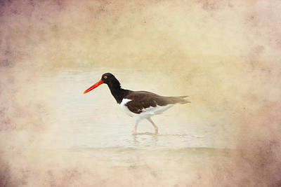 Ocean Photograph - American Pied Oystercatcher 3 By Darrell Hutto by J Darrell Hutto