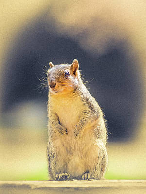 Photograph - American Red Squirrel by Mark Mille