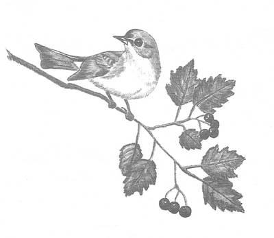 Atlantis Drawing - American Redstart by Catherine Burton