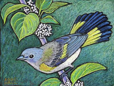 American Redstart Female Art Print by Ande Hall