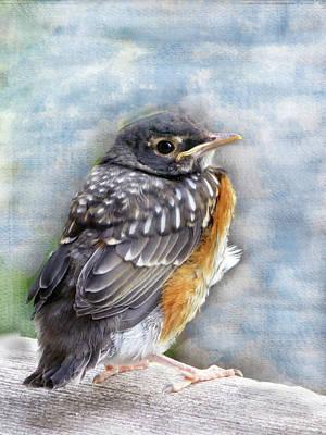 American Robin Fledgling In Springtime Original