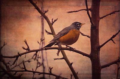 Migration Digital Art - American Robin by Maria Angelica Maira
