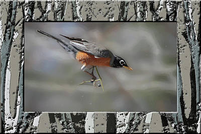 Digital Art - American Robin Perching Alertly On Small Branch by Rusty R Smith