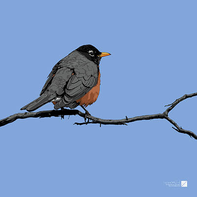 Digital Art - American Robin - Sky Blue by Marcus England