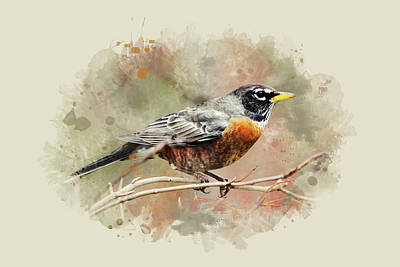 Mixed Media - American Robin - Watercolor Art by Christina Rollo