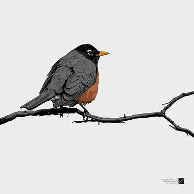 Digital Art - American Robin - White by Marcus England