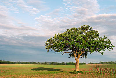 Photograph - American Savannah by Todd Klassy